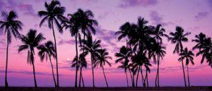 louisa aparthotel dominicana atardecer palmeras