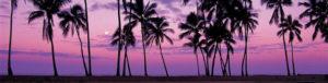 louisa aparthotel dominicana palmeras atardecer
